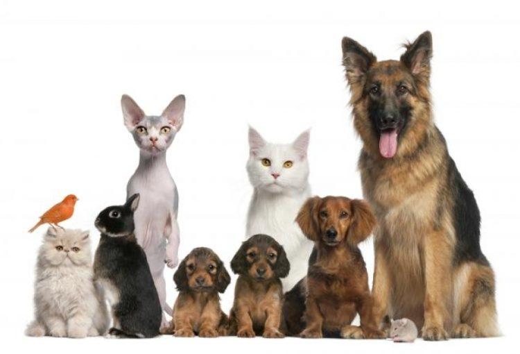 Mascotas felices en tu nuevo hogar