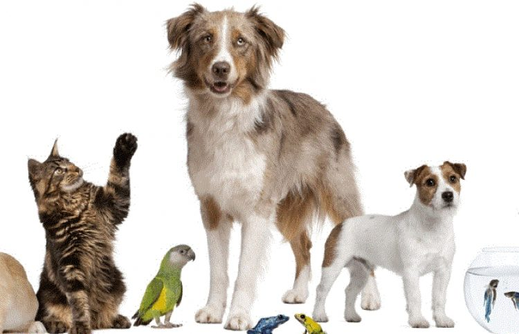 La tenencia de mascotas